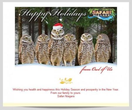 20141215 safari niagara email newsletter 450x375